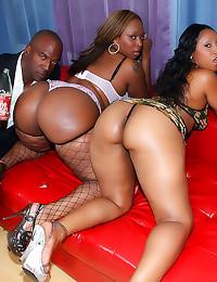 Huge ass black bitches boned